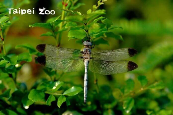 Foto: Taipei Zoo
